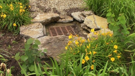 Student researchers focus on NKU rain garden
