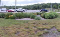 NKU rain garden helps student research