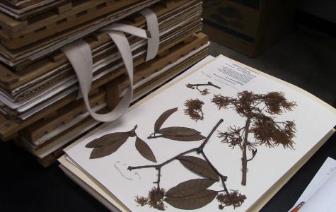Pressed plants from NKU's Herbarium.